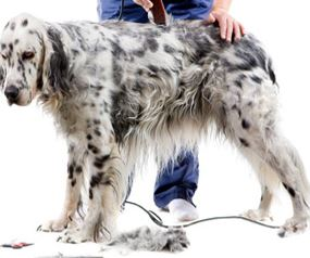 Dog-Grooming-Service-In-Ormskirk