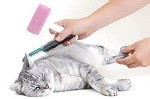 Cat Grooming Service in Charnock Richard