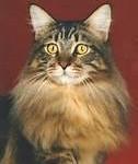 Cat Grooming Service in Eccleston