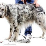 Dog Groomers in Atherton