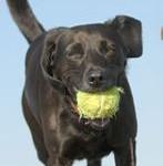 Boarding for Dogs in Billinge
