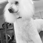 Dog Grooming Service in Standish
