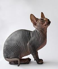cat groomers in Wigan