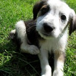 Dog Boarding Near Rufford – Providing You with Peace of Mind