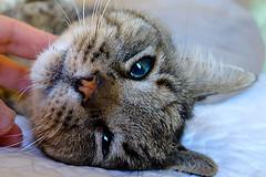 Cat Grooming Service In Adlington