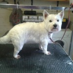 Dog Grooming Service in Burscough